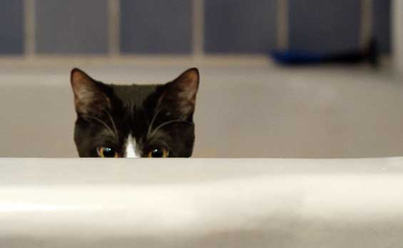 Cat peeking out of bathtub